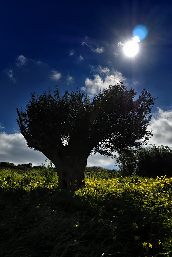 Photograph tree by Jose Luis Fernandez on 500px
