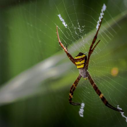 spider, Nikon COOLPIX L22