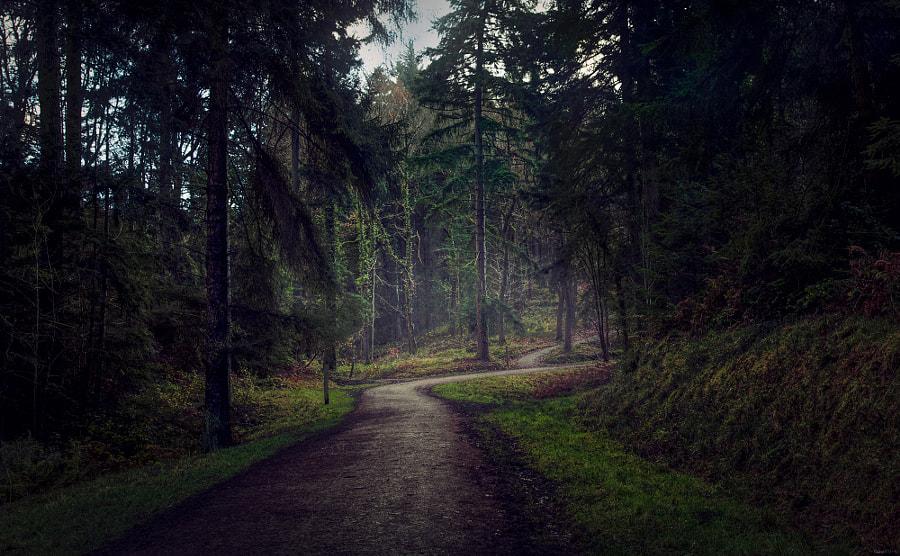 Wyre Forest green route woodpecker trail IIII., автор — EncroVision  на 500px.com