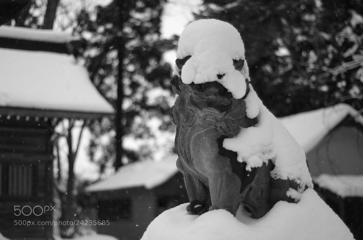 Photograph snow lion on the right by Sayaka Suzuki on 500px