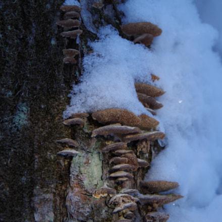 It is a Fungi, Pentax K-50, smc PENTAX-DA 18-135mm F3.5-5.6 ED AL [IF] DC WR