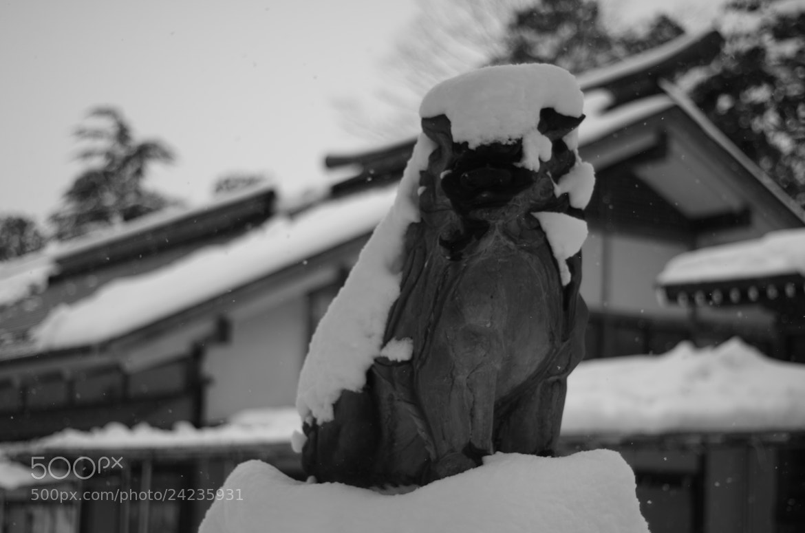 Photograph snow lion on the left by Sayaka Suzuki on 500px