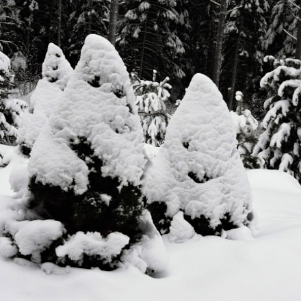 Heavy snow on the, Nikon COOLPIX P600