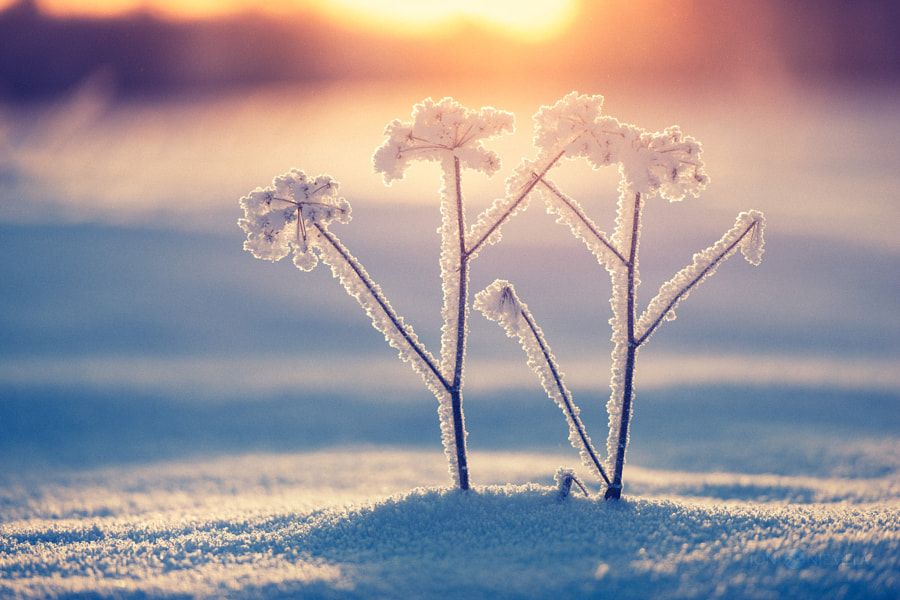 Snowfrost, автор — Joni Niemelä на 500px.com