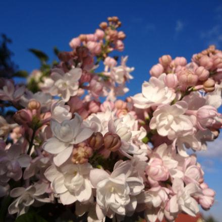 Flowers, Sony DSC-WX50
