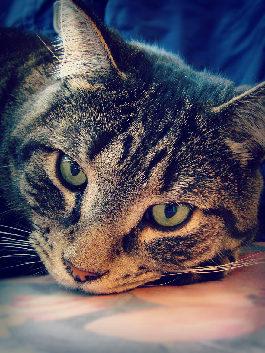Photograph Cat by Catherine Alarie on 500px