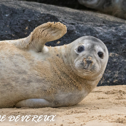 Seal pup taken at Winterton