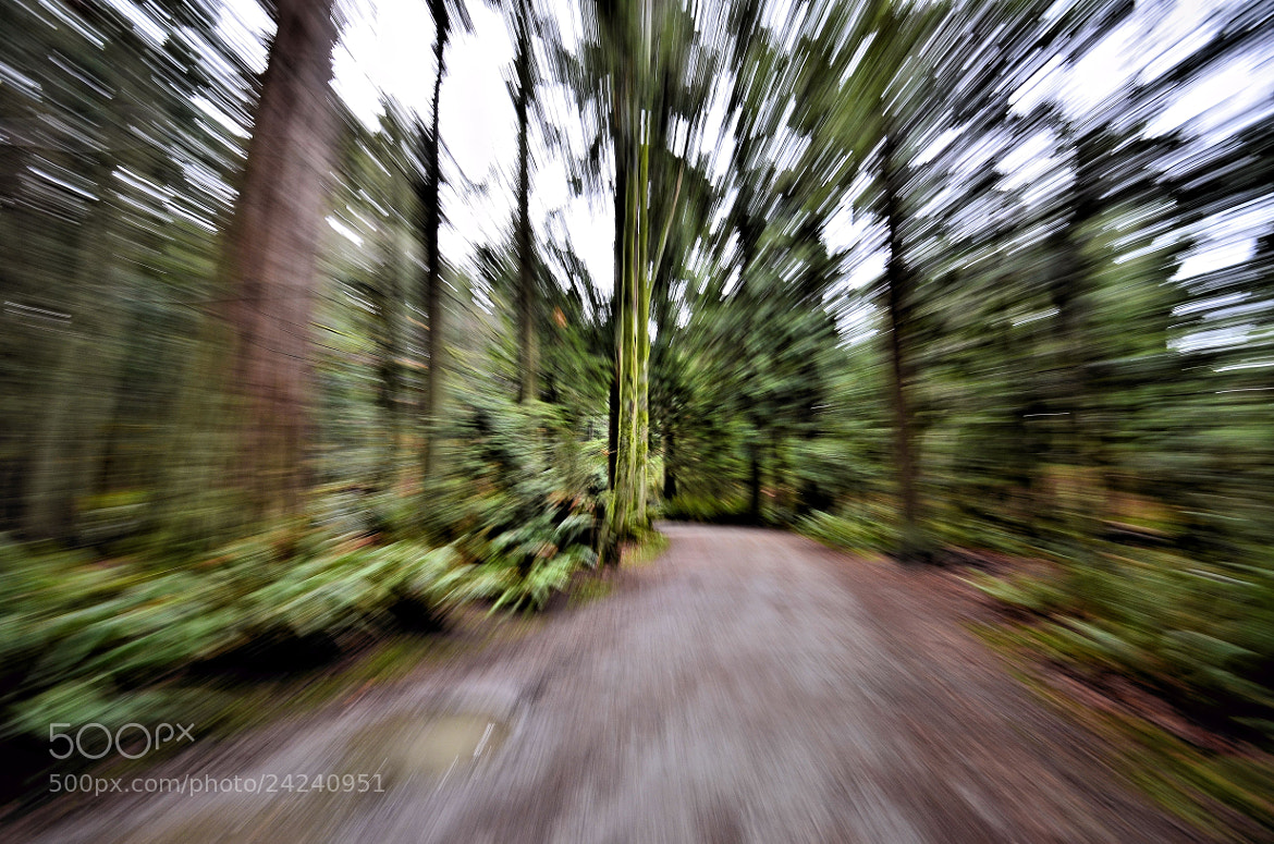 Photograph In My imagination - my escape....into the woods by Valerie Sauve on 500px