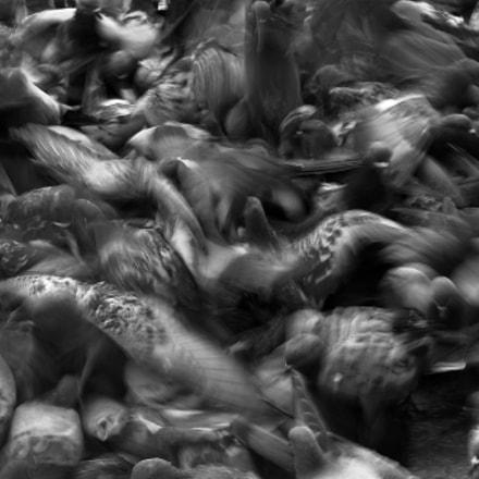 Crowded, Nikon D1