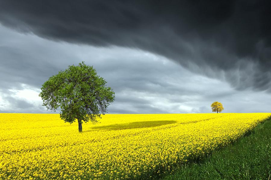 Spring, автор — Bess Hamiti на 500px.com