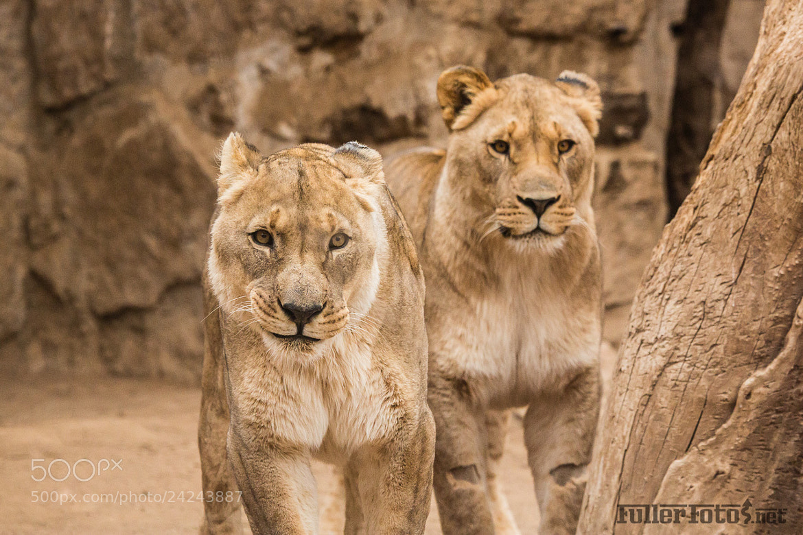 Photograph Cheyenne Mountain Zoo by Tom Fuller on 500px