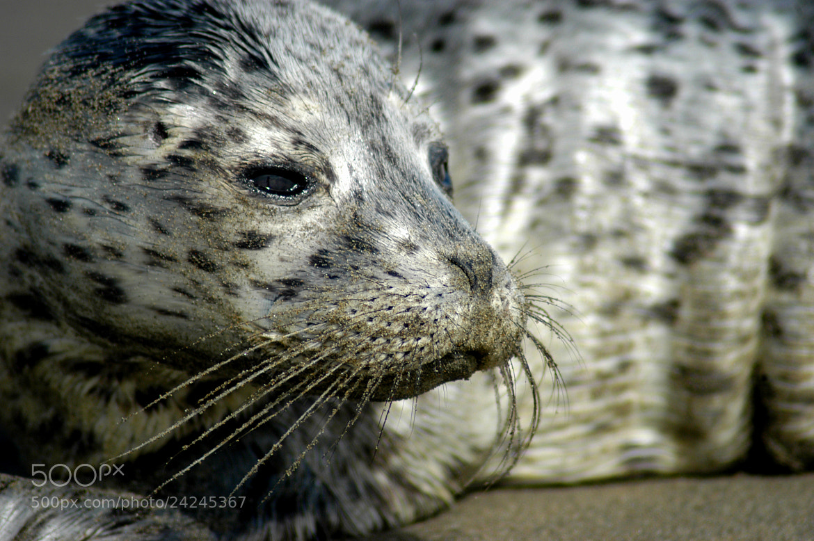 Photograph Lost Baby Harbor Seal by Glenn  McGloughlin on 500px