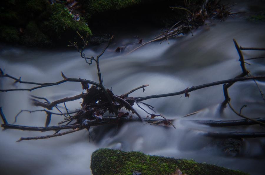 branches von dirk derbaum auf 500px.com