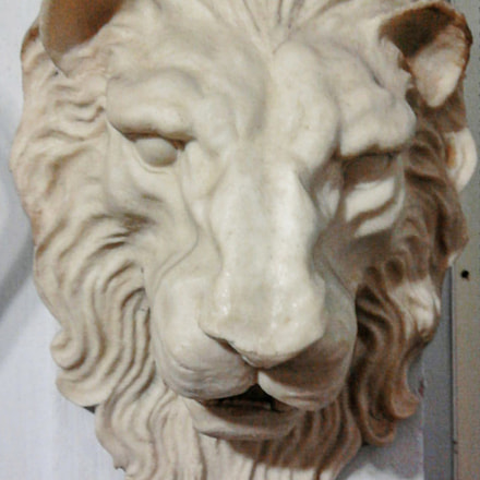 Face of the lion, Samsung GT-S5233S
