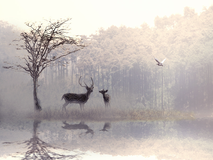 Photograph Two deer by 3 Joko on 500px