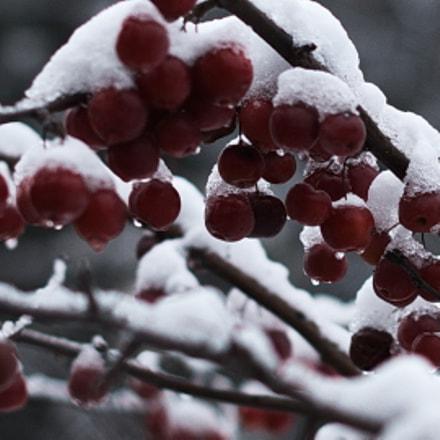 Cherry, Nikon D60, AF-S Nikkor 50mm f/1.4G