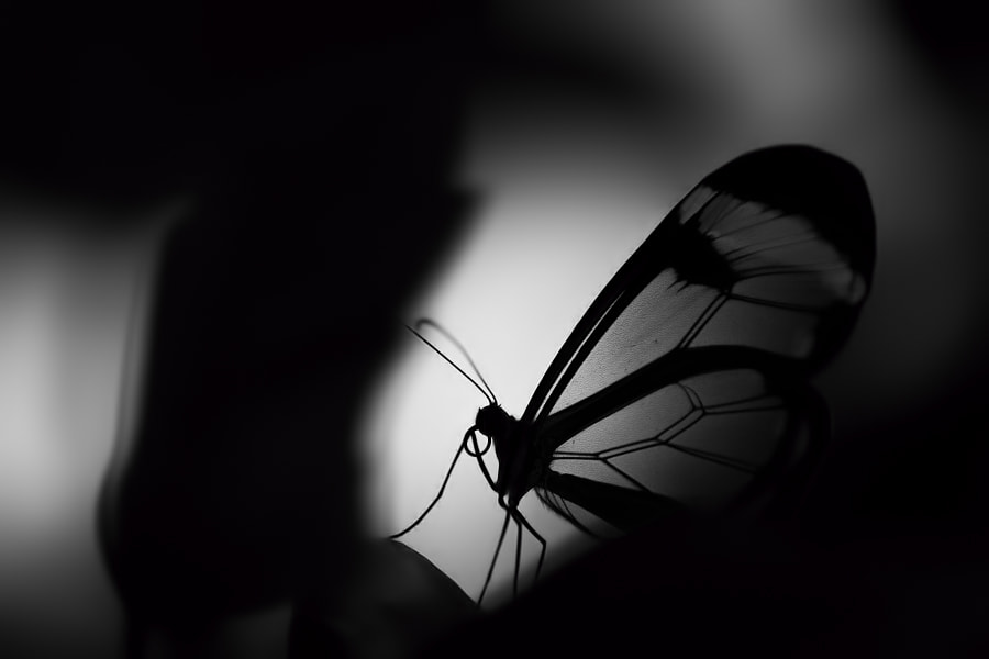 Photograph Mysterious butterfly by Stéphane ABCDEF on 500px