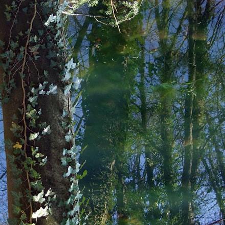 pond, Fujifilm FinePix F31fd