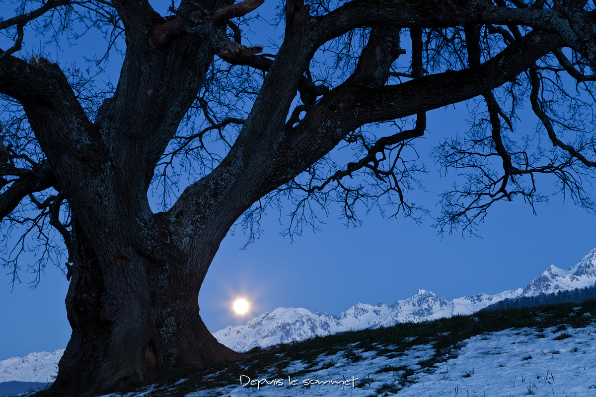 Photograph Oak and full Moon by NICOLAS BOHERE on 500px