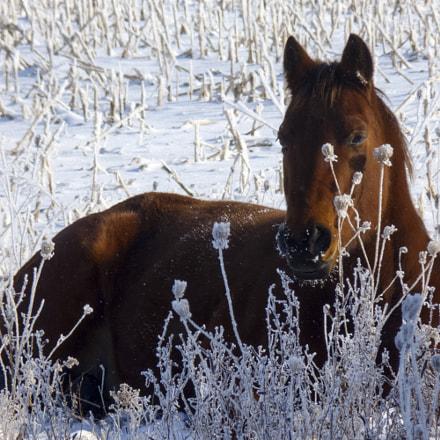 Horse Sense, Panasonic DMC-FZ35