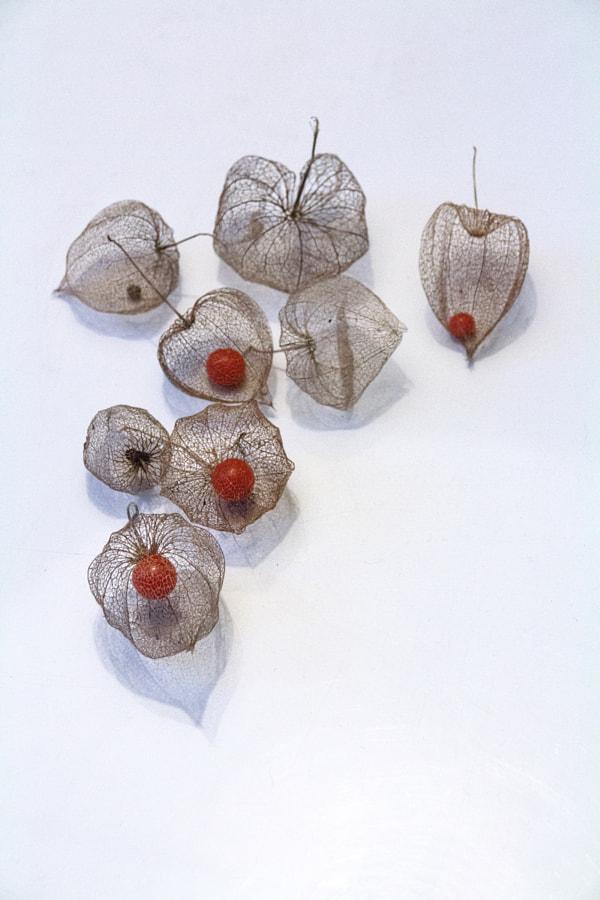 Les cages de Christine Druesne sur 500px.com