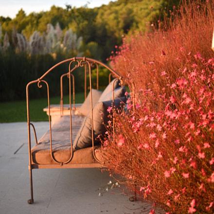 sunrise bench, Nikon D810, AF Nikkor 35mm f/2