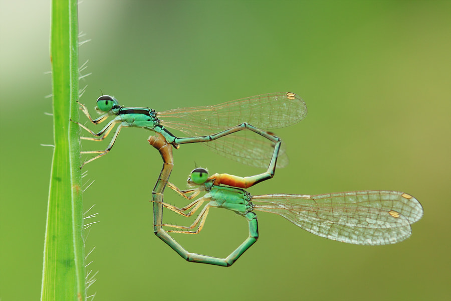 Photograph In Love by Said Ikhsan on 500px
