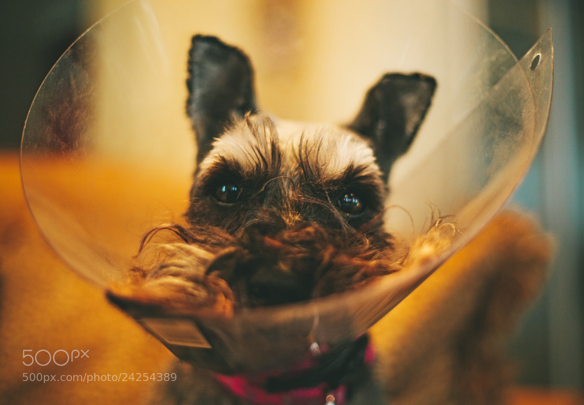 Photograph Cone of Shame by Robert Fielder on 500px