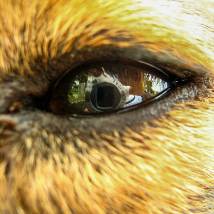 Hund Auge, Canon POWERSHOT A460