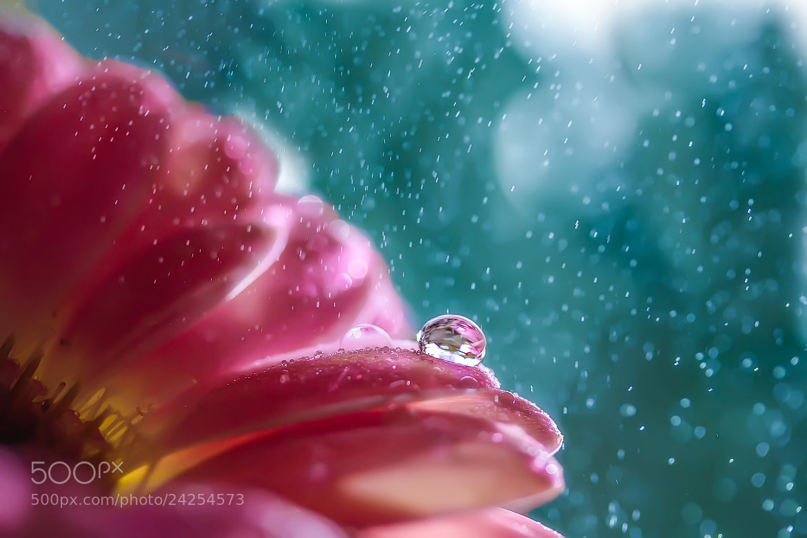 Photograph Drizzly day by Miki Asai on 500px