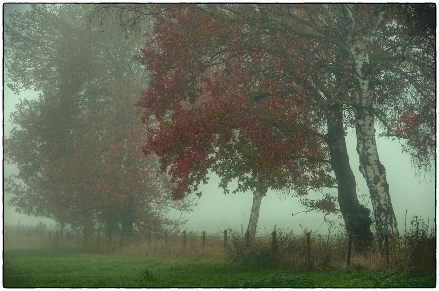 Photograph Foggy Day by Cor Pijpers on 500px
