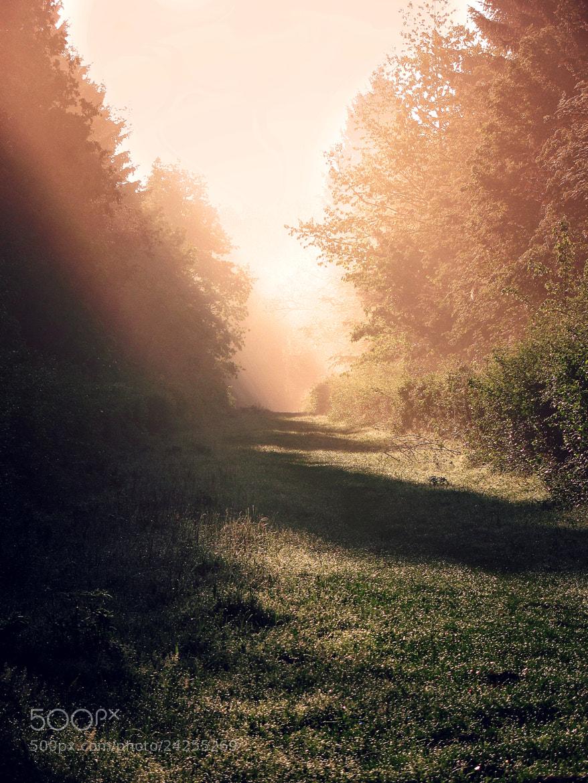 Photograph After Morning by Dmytro Zaverukha on 500px