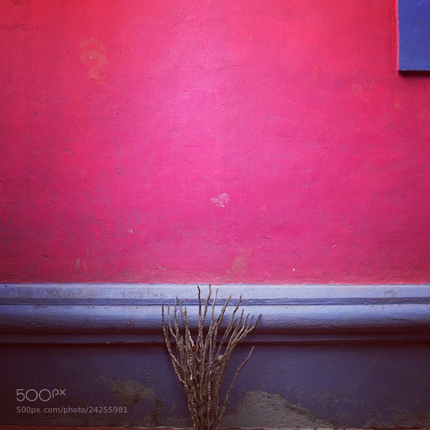Photograph Pink by Ju  on 500px