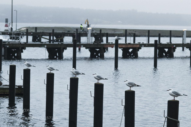 Photograph seagulls by Matze Katze on 500px