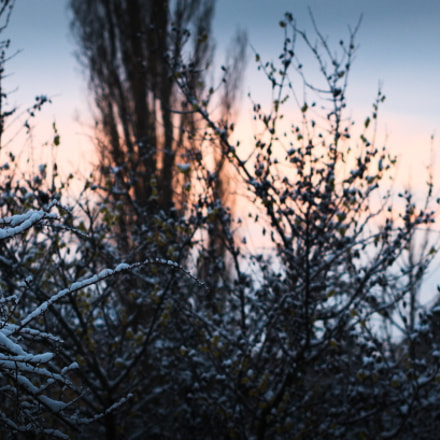 Sunset over Botanic Garden, Nikon D60, AF-S Nikkor 50mm f/1.4G