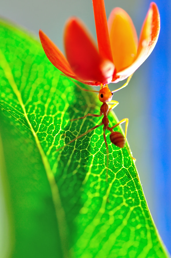 Photograph Up by hirza kini on 500px