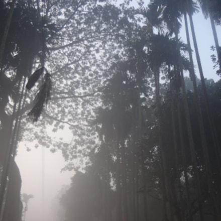 foggy morning, Sony DSC-W570