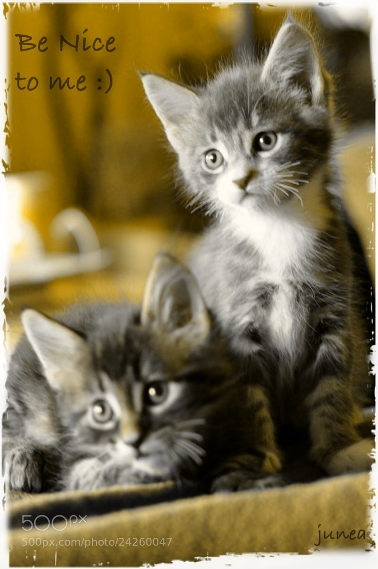 Photograph Kittens by June A on 500px