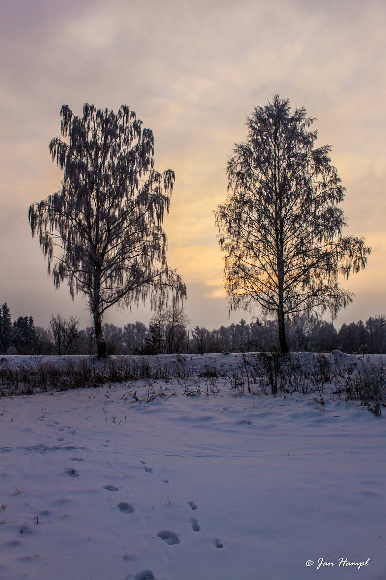 Photograph Sunset in winter by Jan Hampl on 500px