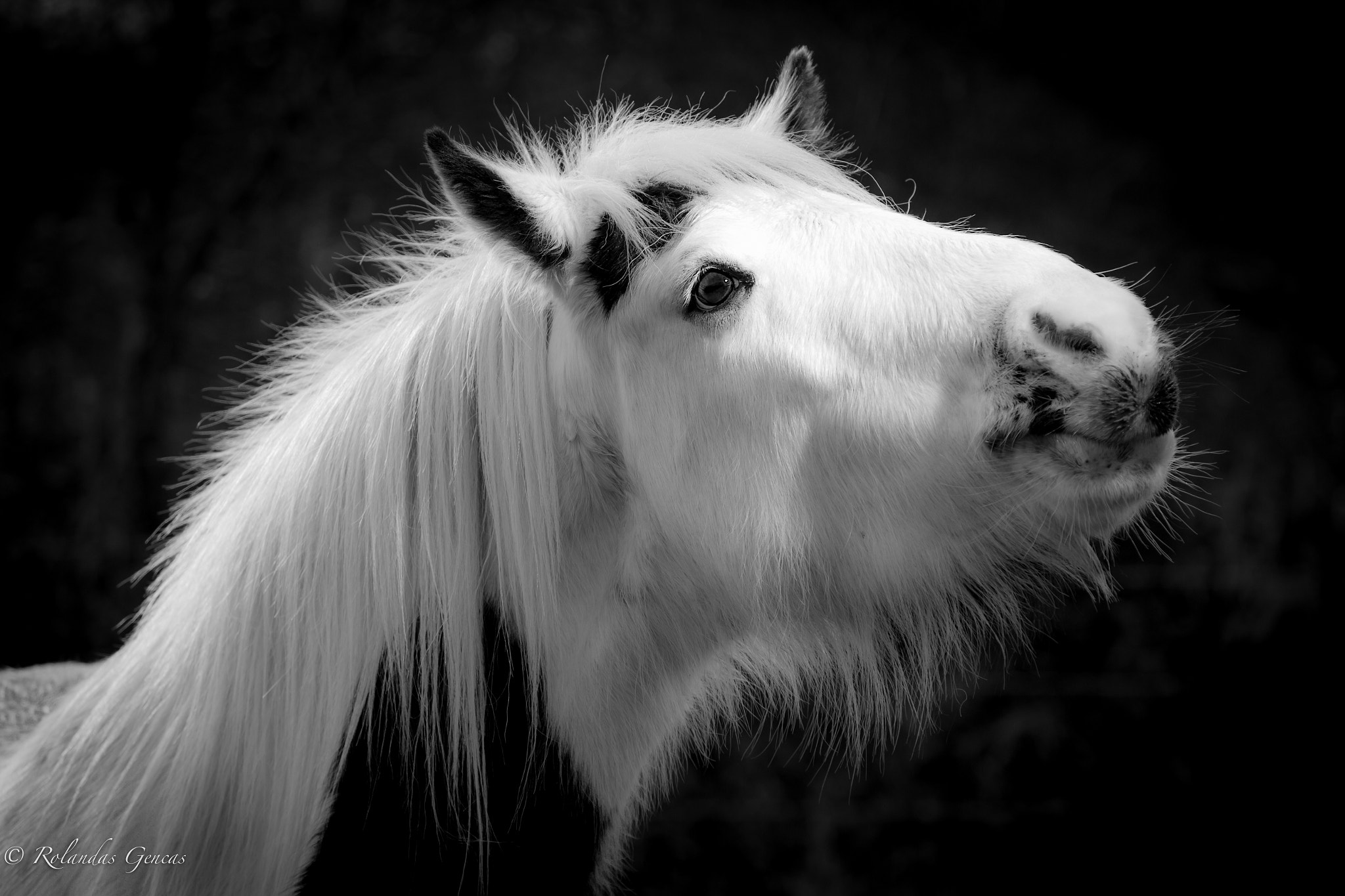 Photograph The Horse by Rolandas Genčas on 500px