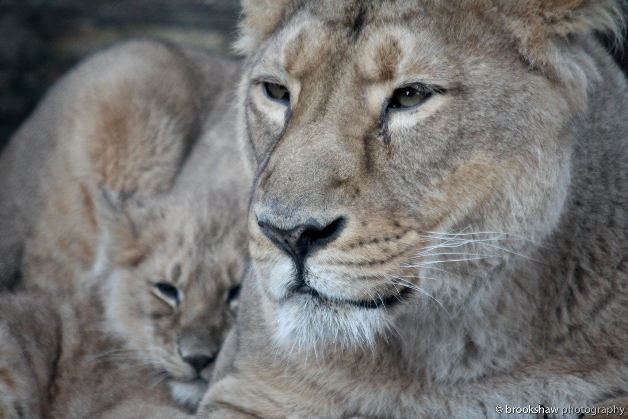 Photograph A Cuddle With Mum 2 by Gary Brookshaw on 500px