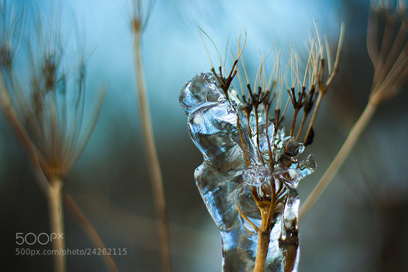 Photograph Iceflower by Margrét Elfa Jónsdóttir on 500px