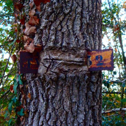 The tree's meal, Sony DSC-W150