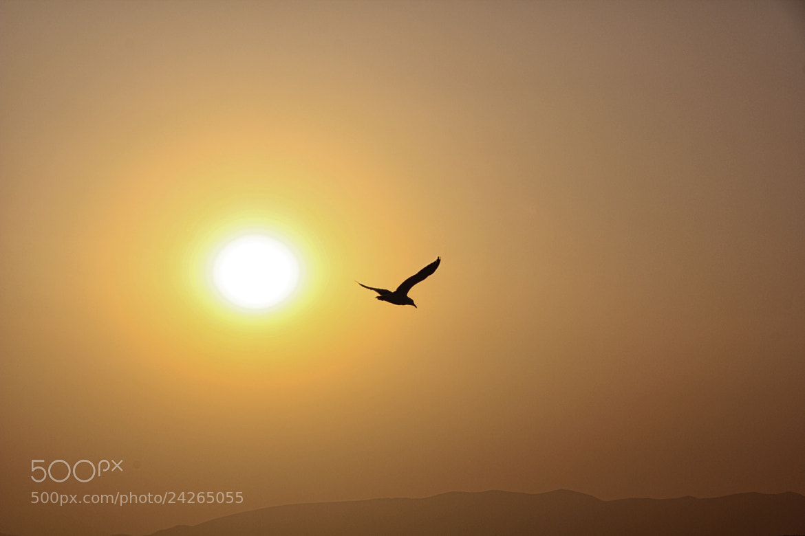 Photograph Flying by José Sobral on 500px