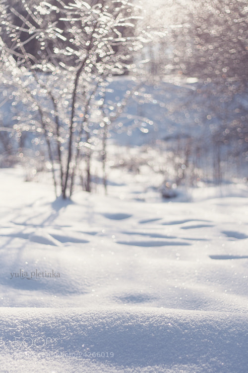 Photograph tinkling winter by Yulia Pletinka on 500px