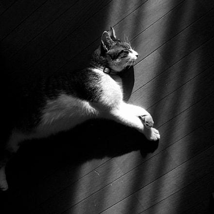 Cat, Fujifilm FinePix F31fd