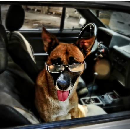 The Cool Dog, Sony DSC-HX1