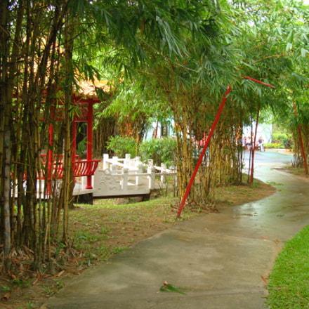 Bamboo Trees Along The, Sony DSC-W300