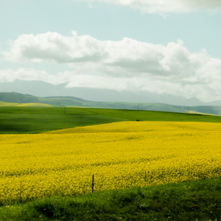 spring in south africa, Panasonic DMC-FZ100