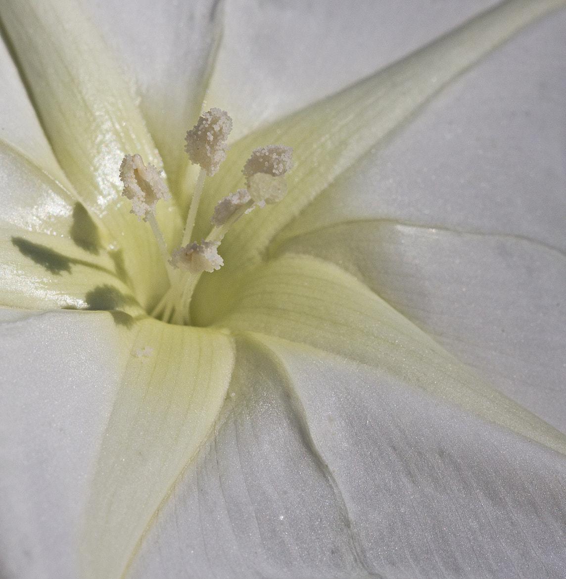 Photograph White Glory by Kirsten Cunningham on 500px